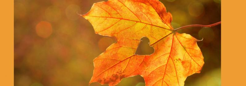 Was Herbst, Lunge und Darm verbinden
